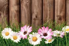 Flowers on grass in front of wooden fence Stock Image