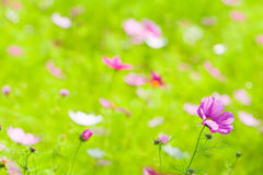 Flowers in grass green. Background. Abstract Stock Photo