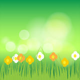 Flowers and grass on green bokeh background Royalty Free Stock Photo