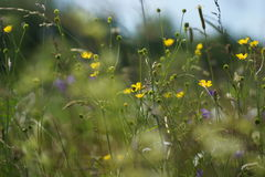 Flowers and grass lit by warm sunlit on a summer meadow, abstract natural backgrounds for your design. Stock Photos