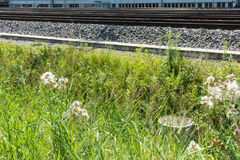 Flowers and grass next to train track royalty free stock photo