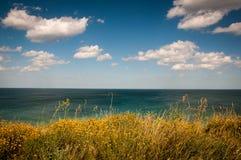 Flowers in Grass Overlooking Ocean Water Royalty Free Stock Photo