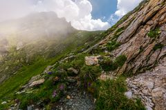 Flowers and grass on rocky cliffs in fog. Beautiful nature scenery in Fagarasan mountains on a cloudy summer day Stock Images
