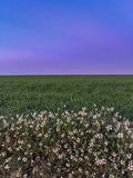 Flowers, grass, sky the best of nature.  royalty free stock image