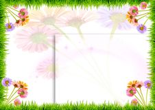 Flowers and grass on a white background Stock Photos