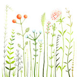 Flowers and Grass on White Grassland Collection Stock Photography