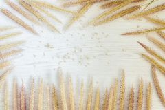 Flowers grass on white wooden background. Nature with vintage style Royalty Free Stock Photography