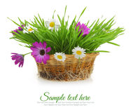 Flowers and grass in wicker basket Stock Images
