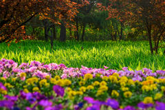 Flowers and grass Royalty Free Stock Photo