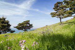Flowers, grassfield and trees on a slope. View of flowers, grassfield and trees on a slope at the Seongsan Ilchulbong (Sunrise Peak) on Jeju Island in South Stock Photo