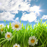 Flowers with grassy field on blue sky Stock Images