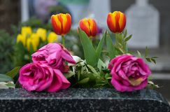 Flowers on a grave. Three tulips and three roses on a dark grave, with flowers and graves in the background. The roses are dry but the red and yellow tulips are stock photo