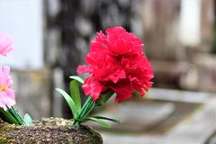 Flowers In A Graveyard. Vibrant flowers in a graveyard at dusk Royalty Free Stock Photography