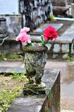 Flowers In A Graveyard. Vibrant flowers in a graveyard at dusk Stock Images