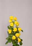 Flowers on gray background. Colored flowers isolated on gray background Stock Image