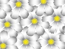Flowers gray Royalty Free Stock Image