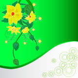 Flowers on the green background. Abstract green background with flowers Stock Images