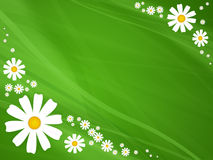 Flowers on green background Royalty Free Stock Images