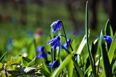 Flowers. Green early spring bright flowers Royalty Free Stock Photo