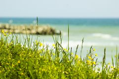 Flowers and green fields by the sea. Stock Photos