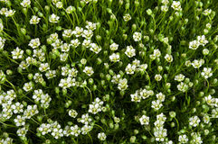 Flowers and green grass Stock Image
