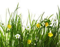 Flowers in green grass Royalty Free Stock Images