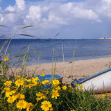 Flowers in green grass against the blue sky, Mediterranean Sea background, boat on the beach of Bat Galim, Israel Stock Photos