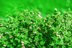 Flowers and green grass on meadow Royalty Free Stock Photo