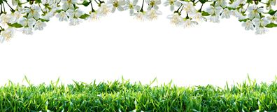 Flowers and green grass. Spring border. stock photo