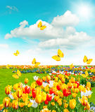 Flowers in green grass. Spring landscape with blue sky Royalty Free Stock Photo