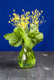 Flowers with green leaves in a vase. On a table with a blue background Royalty Free Stock Photo