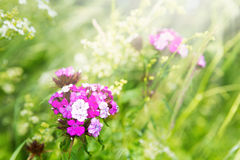 Flowers on the green meadow Royalty Free Stock Photos