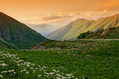 Flowers on a mountain meadow Royalty Free Stock Photography