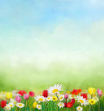 Flowers and green nature composition for background with sky. Royalty Free Stock Images