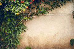 Flowers and green plant on old wall Royalty Free Stock Photography