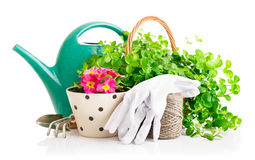 Flowers and green plants for gardening with garden tools Stock Photos