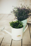 Flowers and green plants in pot and retro watering can Royalty Free Stock Photography