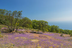 Flowers on a green plateau above the gulf in coast Royalty Free Stock Image