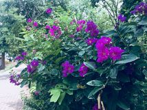 Flowers Greenery trees Royalty Free Stock Photography
