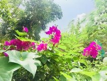 Flowers Greenery trees Stock Photography