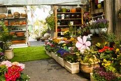 Flowers greenhouse Stock Image