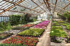 Flowers in greenhouse Stock Image