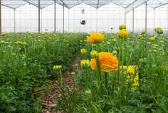 Flowers in greenhouse Royalty Free Stock Photography