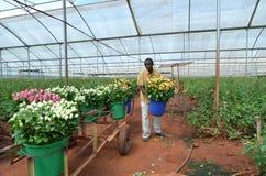 Flowers greenhouses Stock Photos