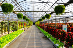 Flowers in greenhouses on both sides of the aisle. Flowers corridor in the agricultural park Royalty Free Stock Images