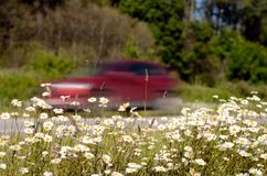 Flowers grow along the road. Driving at high speed on the road Stock Photo