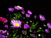 Flowers grow Royalty Free Stock Photos