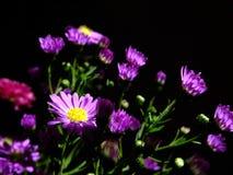 Flowers grow Royalty Free Stock Photos