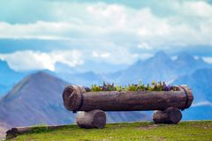 Flowers grow in a log. With mountains in the background royalty free stock images