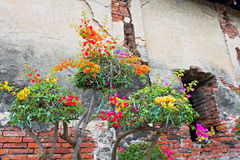 Flowers grow on ruins in Ayutthaya Royalty Free Stock Photography